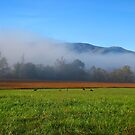 Grazin' in the Grass by JKStanford