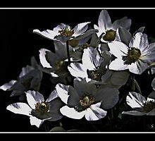 Flower Noir by Sheree Zielke
