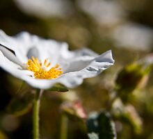White and Green. Flowers and Bokeh. by Victoria Penrose