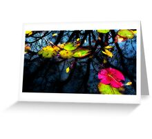 Light Reflection on Lilly Pond Greeting Card