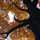 """""""Our Tree"""" by kmdphotog"""