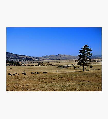 Washoe Valley Photographic Print