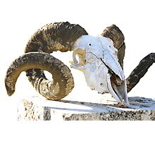 Rams Head Photographic Print