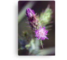 Thistle Burst... Canvas Print