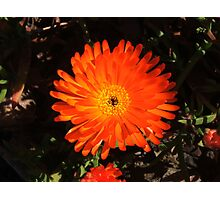 Striking Orange Photographic Print