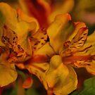 Lillies by artsthrufotos