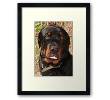 Seven Months of Rottie  Framed Print