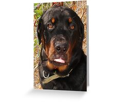 Seven Months of Rottie  Greeting Card