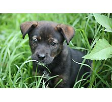 Lilly - rescue puppy Photographic Print