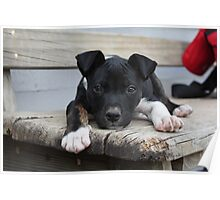 Cody - rescue puppy Poster