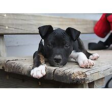 Cody - rescue puppy Photographic Print