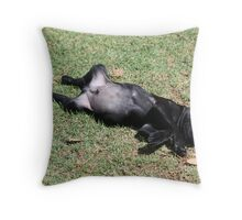 Dominic - rescue puppy Throw Pillow