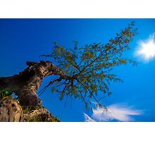 The tree under direct sunlight and blue sky Photographic Print