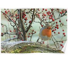 A Robin On A Branch Poster