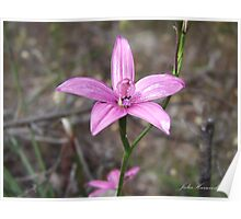 Pink Enamel Orchid Poster