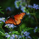 The Queen Butterfly 2 by jphall