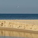 Lone Gull by BarbL