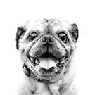 Pugalicious by Donna Rondeau