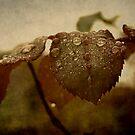 Antique by rosedew