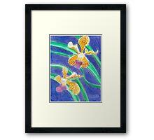 Orchid - Oil Pastel Framed Print