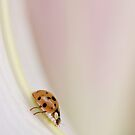 Ladybird on the Slide by AnnieSnel