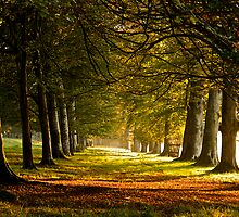Autumn Morning at Lanhydrock, Cornwall by Emma Duncan