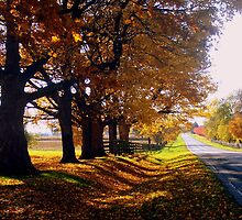 Country Road on Autumn Afternoon by Brian Gaynor
