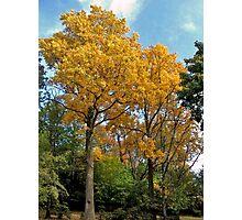 Autumn Colors NJ (Fall 2009) Photographic Print