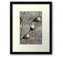 Girls Day Out - Three Chaffinches Shoot the Breeze Framed Print