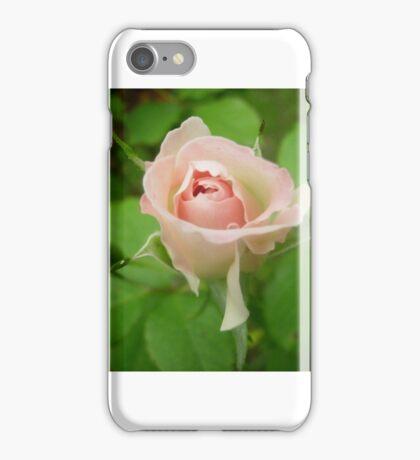 Rosebud, Morning iPhone Case/Skin
