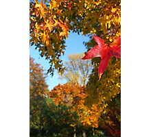 Cologne Autumn Photographic Print