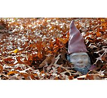 Elusive Yard Gnome Enjoys Fall Cover Photographic Print