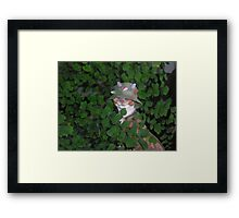 funny cat maybe hunting Framed Print