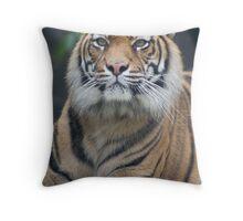 Tiger Alert Throw Pillow