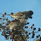 Little Birdie by Wendella Reeves