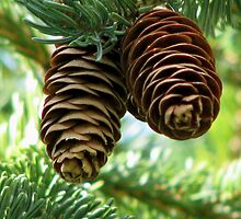 Pine Cones by swaby