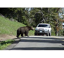 Grizzley in Yellowstone 4 Photographic Print