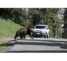 Grizzley in Yellowstone 5 Photographic Print