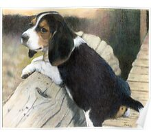 Beagle Puppy Dog Portrait Poster
