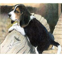 Beagle Puppy Dog Portrait Photographic Print