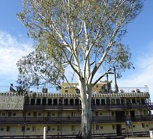 Splended Eucalyptus Dwarfs the Murray Princess! by Rita Blom