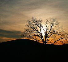 Lone Tree - Shenandoah National Park by Deb Snelson