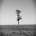 Lonely Tree - Maraylya by shmoo