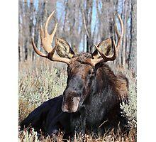 Sitting Bull. (Jackson Wyoming) Photographic Print