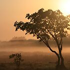 Kakadu sunrise by Lynda Harris