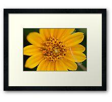 Yellow Macro Framed Print