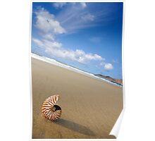 Beached Nautilus Poster