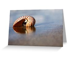 Beached Nautilus Greeting Card
