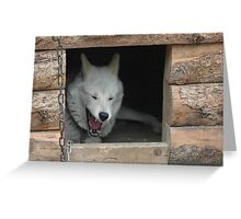 Alaska Sled Dog Greeting Card