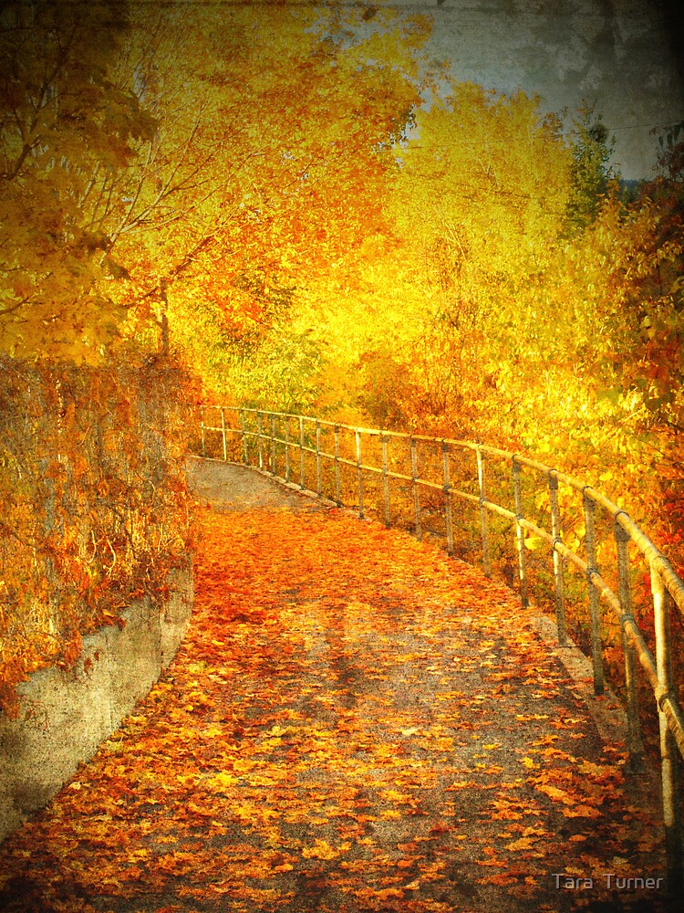 The Autumn Curve by Tara  Turner